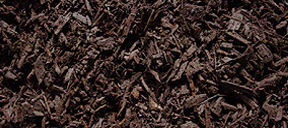 Bellingham Mulch | Bellingham Beauty Bark